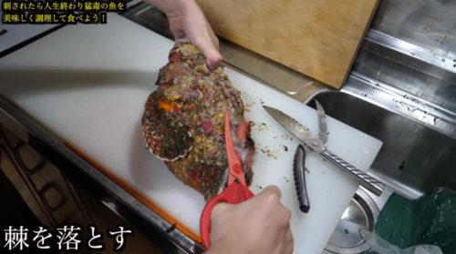 きまぐれクックの赤いハサミ『カーブキッチンハサミ』の通販は?オニダルマオコゼのぶった切る!