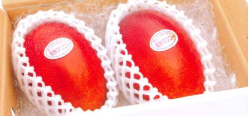 茨城県幻のマンゴー小美玉SUN完熟マンゴー・キーツマンゴーのやすだ園の通販・お取り寄せ情報【ざわつく金曜日】